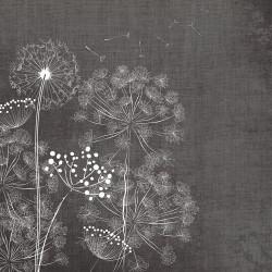 WINDFLOWERS 1